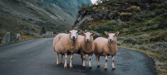 A diferença entre o ladrão e o bom pastor